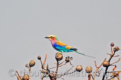 Zambia 2014 Birds
