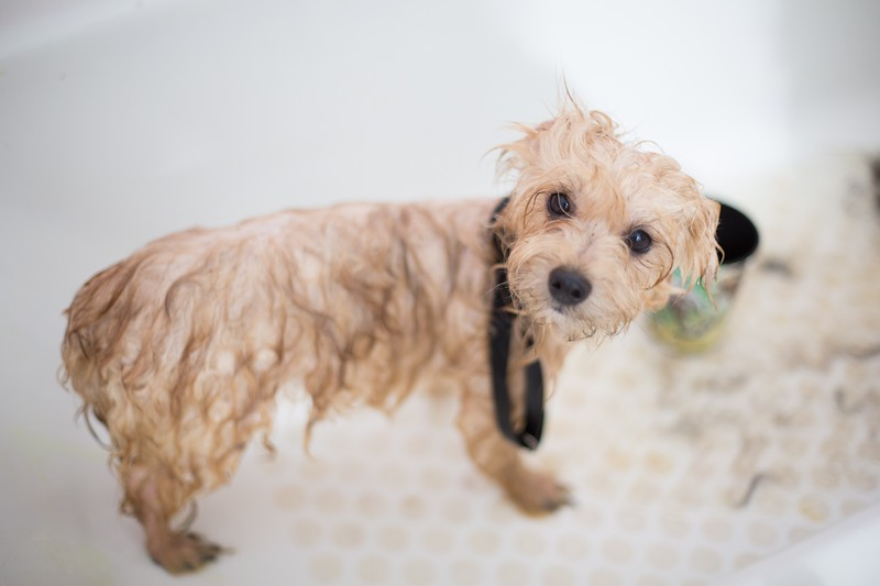 adorable-animal-bath-1436139.jpg