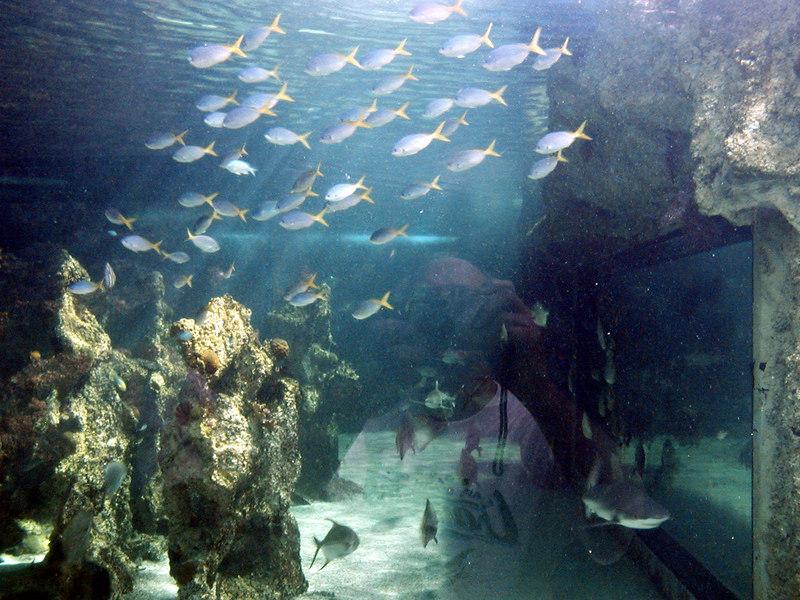 53.  Sydney Aquarium.JPG