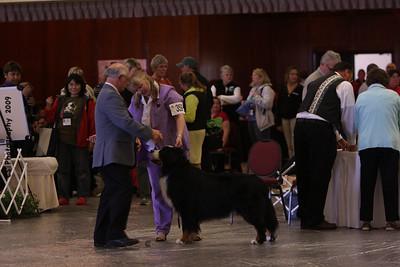 Versatility Dog Over 7yrs-BMDCA 2009