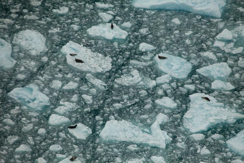 Alaska Icy Bay-3931.jpg
