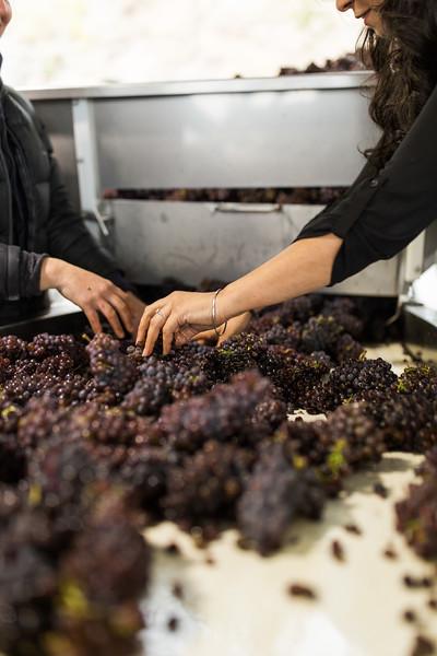 20171006_BC Wine Institute - Central & South Okanagan-2309.jpg