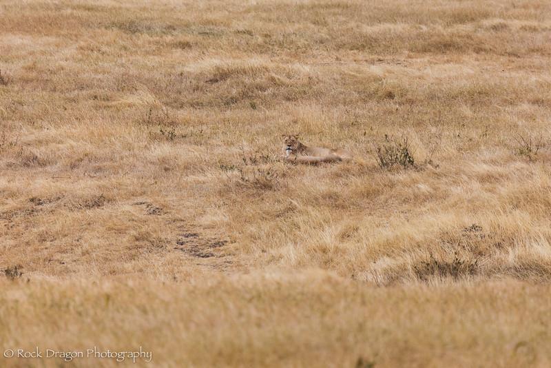 Ngorongoro-81.jpg