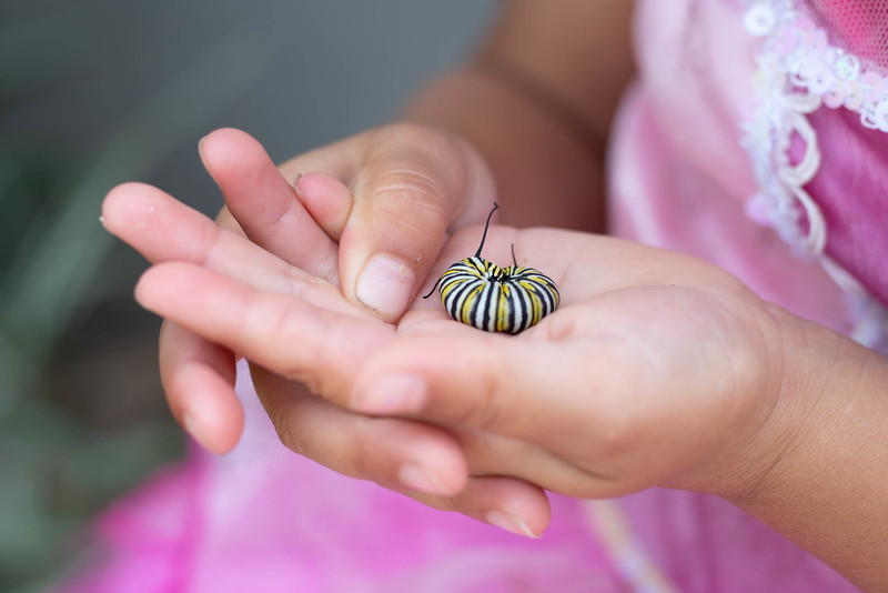 Girl and Monarch