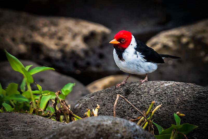JM8_4747 Bird S.jpg