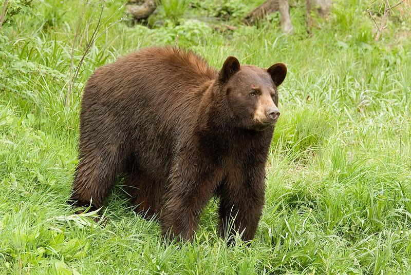 Bears-44.jpg