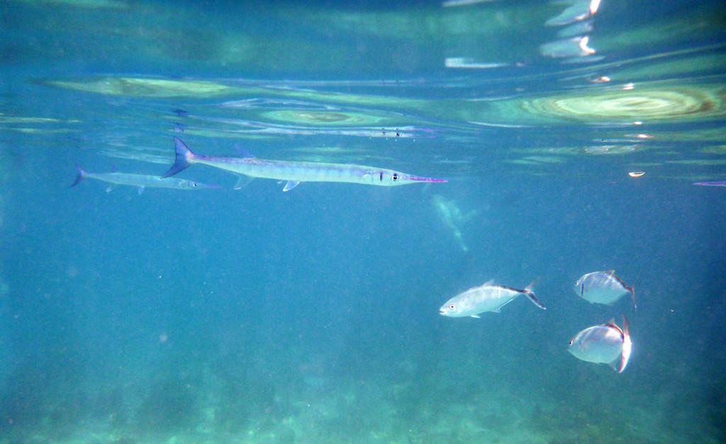 Best Snorkeling in the Caribbean - Trunk Bay - St .John, USVI