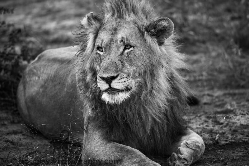 African Wildlife-120.jpg
