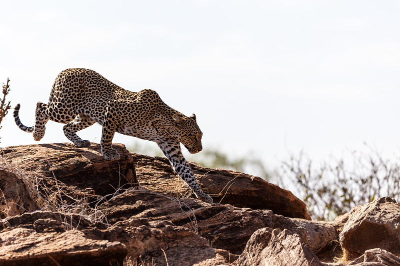 Kenya 2015-00550.jpg