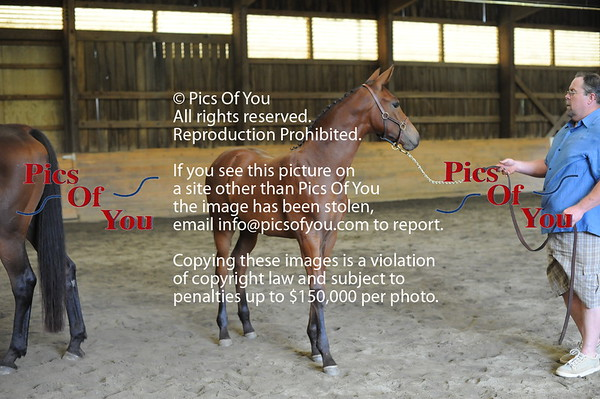 Foal entry 10