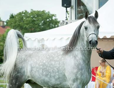 Stallions 4-10 yrs