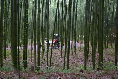 Arashiyama Bamboo Park Kyoto