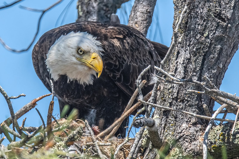 20190604Home Eagles 6-4-19DSC_4460.jpeg