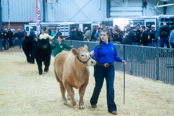 SW District Cattle Shows