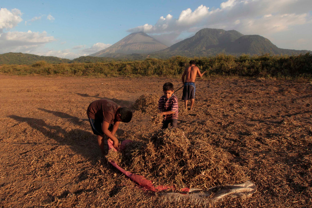 Description of . Children pick up peanuts as ash continues to spew out of the San Cristobal volcano (background), at Chinandega city, some 150 km (93 miles) north of the capital Managua December 26, 2012. The 5,725-foot (1,745-meter) San Cristobal volcano, one of the tallest in Nicaragua, has belched an ash cloud hundreds of meters into the sky in the latest bout of sporadic activity, prompting the evacuation of nearby residents, the government said on Wednesday. REUTERS/Oswaldo Rivas