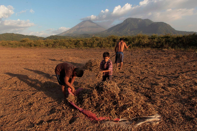 . Children pick up peanuts as ash continues to spew out of the San Cristobal volcano (background), at Chinandega city, some 150 km (93 miles) north of the capital Managua December 26, 2012. The 5,725-foot (1,745-meter) San Cristobal volcano, one of the tallest in Nicaragua, has belched an ash cloud hundreds of meters into the sky in the latest bout of sporadic activity, prompting the evacuation of nearby residents, the government said on Wednesday. REUTERS/Oswaldo Rivas
