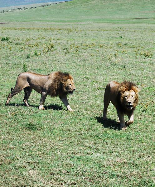 Ngorongoro (141).JPG