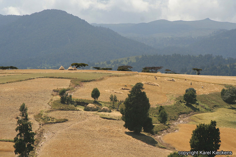 Bale Mountains_05.JPG