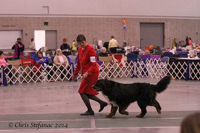 American-Bred Dogs BMDCA 2014