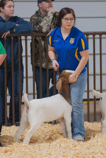 kay_county_showdown_goats_20191207-27.jpg