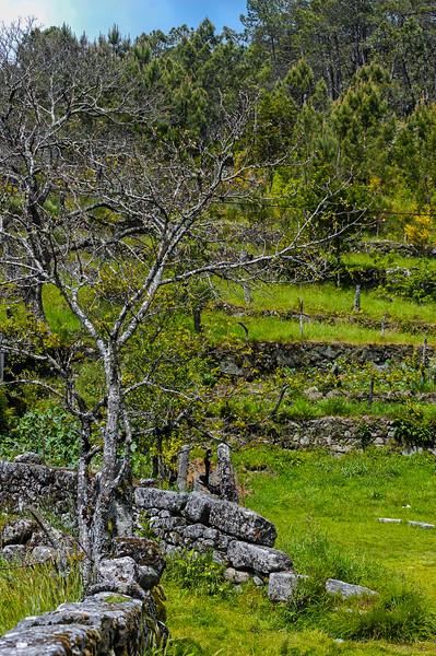 Vouzela-PR2 - Um Olhar sobre o Mundo Rural - 17-05-2008 - 7409.jpg