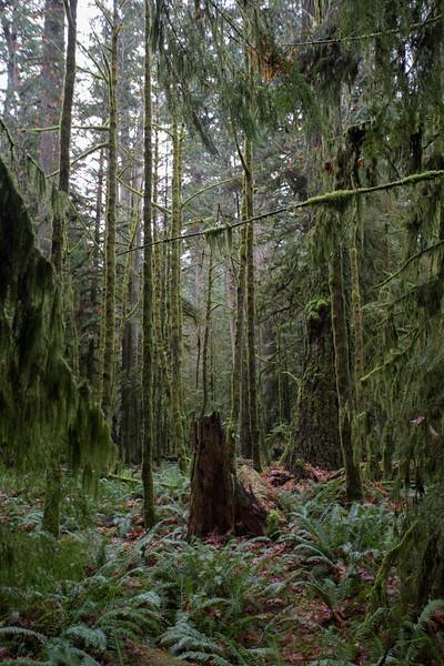 Vancouver island-4.jpg