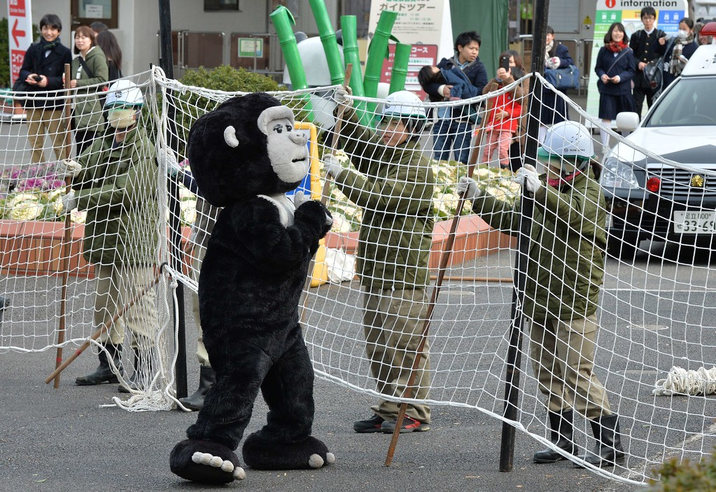 . Zookeepers hold a net to capture an animal keeper dressed in a gorilla costume during a drill to practice what to do in the event of an animal escape at the Ueno zoo in Tokyo on February 6, 2014. About 70 zookeepers participated in the annual drill.     AFP PHOTO / KAZUHIRO NOGI/AFP/Getty Images