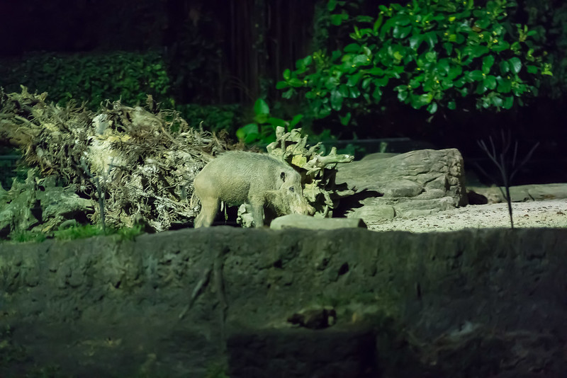 Night-Safari-9583.jpg