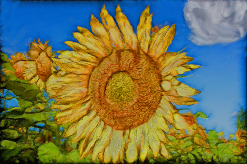 Tournesols Artistic rendering of local sunflowers