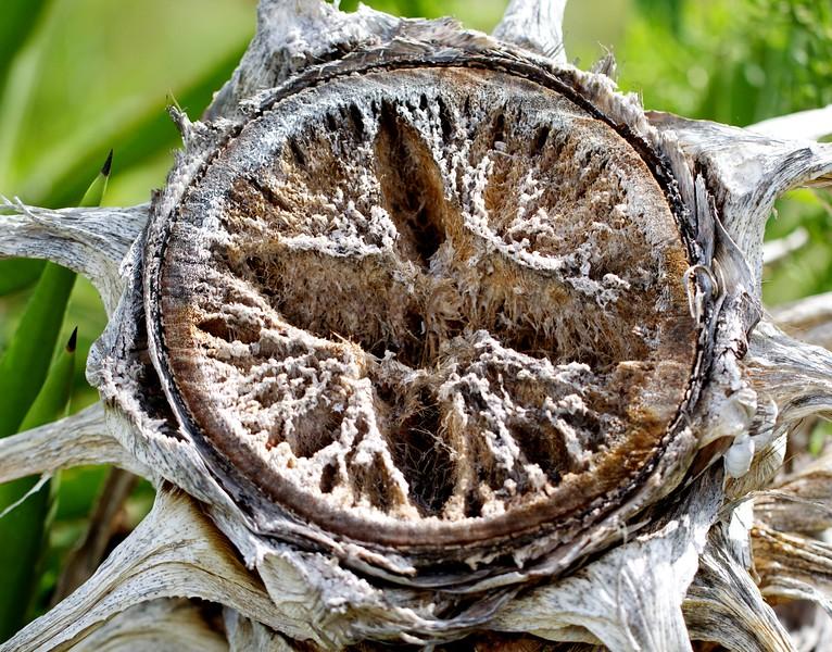 palm tree stump