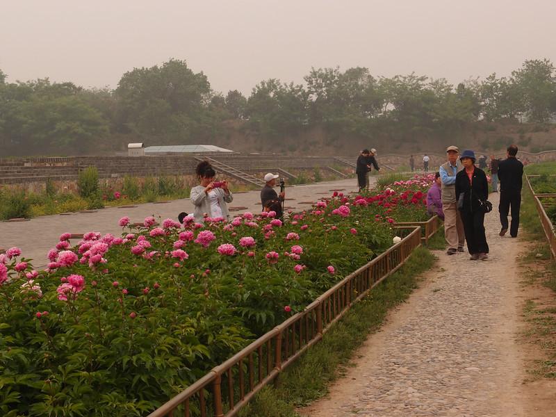 20120513_1153_0279 Yuanmingyuan Peony Garden. I think this is at the former site of the 含经堂 (HaiJingTang 'Tripitaka Hall') (0953 Beijing time)