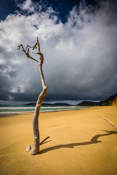 Beach Tree, Queensland Australia