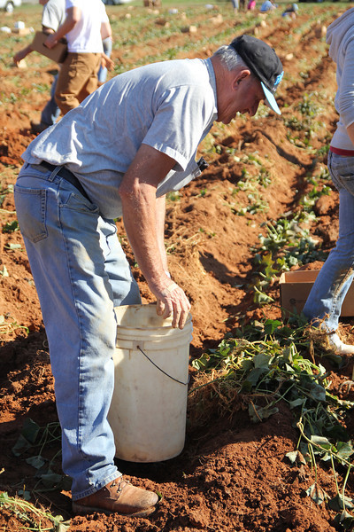 The men in charge spend a good amount of their time working with the Potato Project.