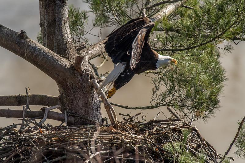 ulster-eagle-103.jpg
