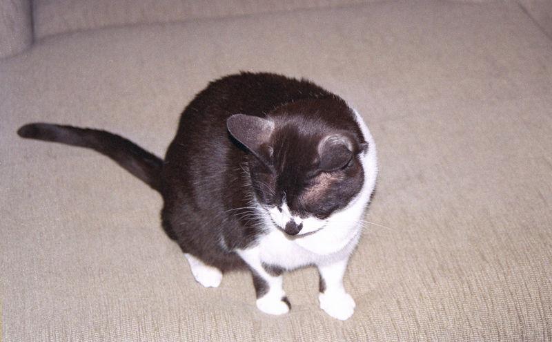 2003 12 - Cats 25.jpg
