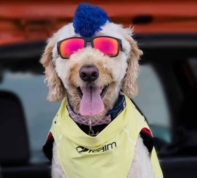 Dog Surf_Dogs-1.jpg