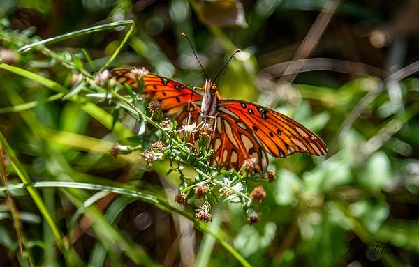 2018 FIELD TRIP Huntsville State Park – Autumn Colors