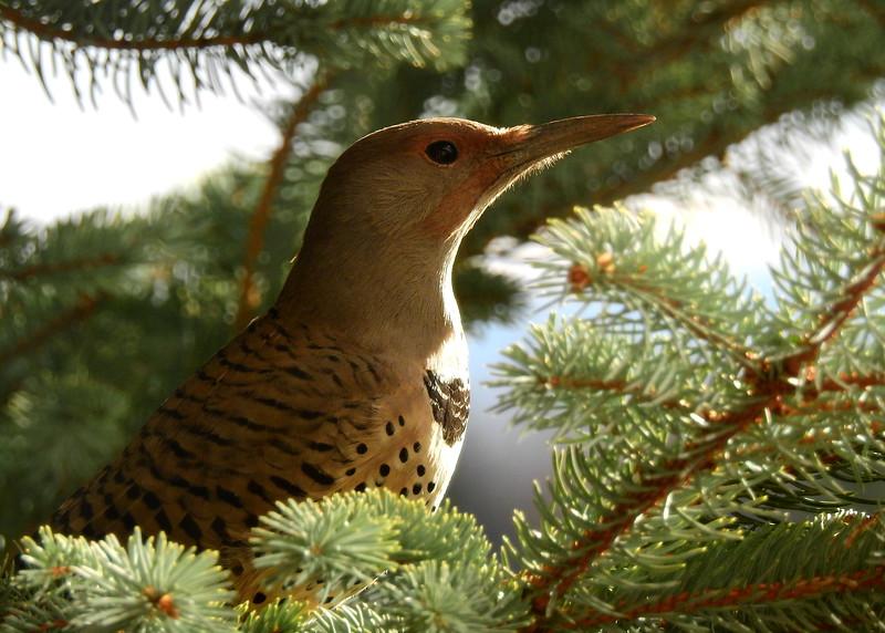 birds (194).JPG