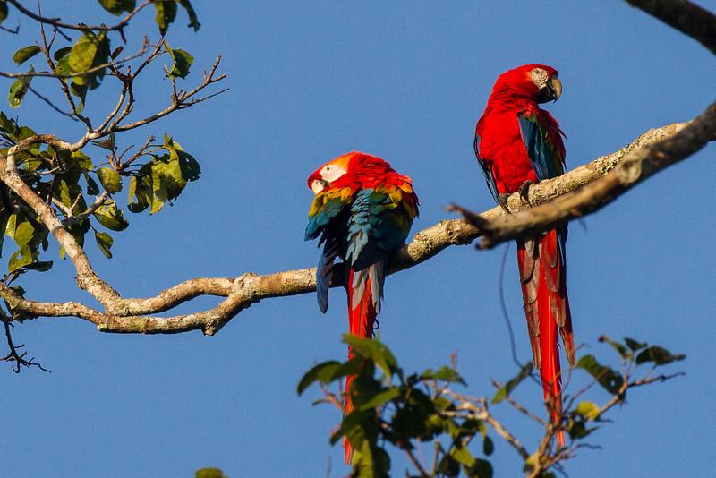 Rainforest51.jpg
