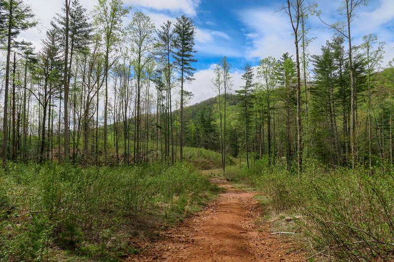 Foster Creek Trail (#610)