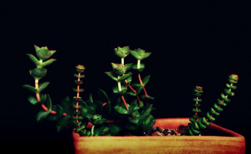 succulents 050920--2.jpg