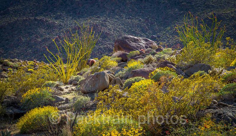 Desert Rock Garden Wonder - DRGW - 1
