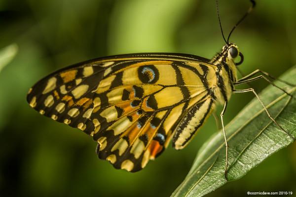 Butterflies & Moths 2018 - Set 10