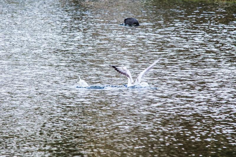Lliswerry Pond & Park -18.jpg