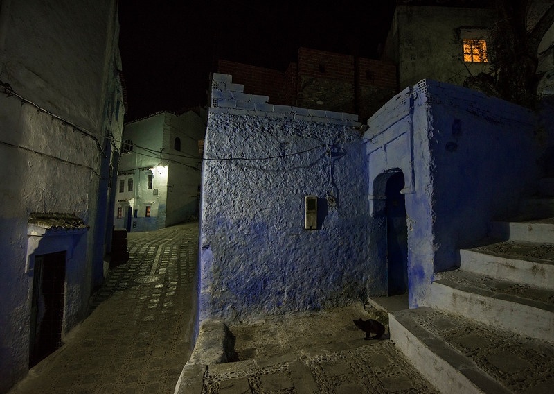 A black cats ventures out into the quite streets of the old medina.  Chefchaaouen, morocco, 2018.