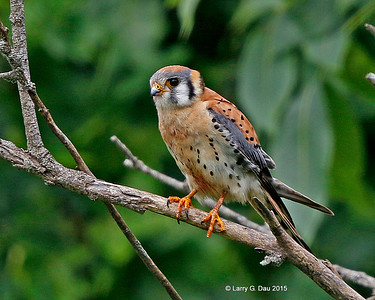 Kestrels of Bear Creek Estates