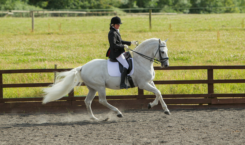 Lusitano Breed Show