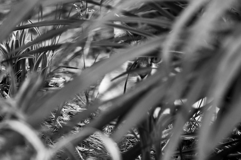 Bobby Stalking in Weeds.jpg