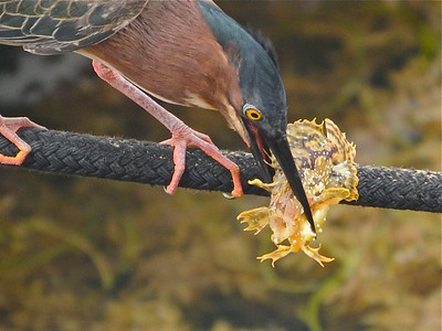 Birds in Action.