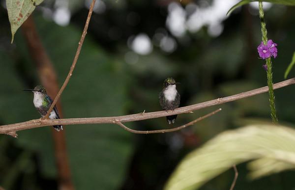 Grouping of Ecuador Hummingbirds 2005 2006 2009 2015